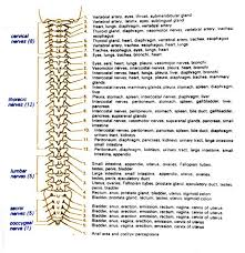 Spinal Cord Injury Levels And Function Chart Google Search