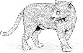 Snow Leopard Coloring Pages Get Coloring Pages