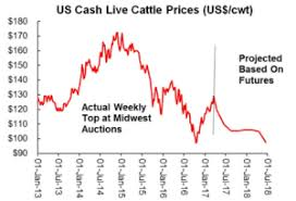 Are Cattle Futures Overdoing The Bearish Risk Hi Pro Feeds