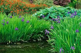 moist soils water iris spurge and hosta