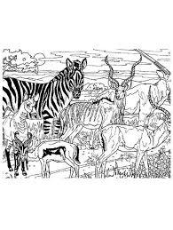 Animali Animali Della Savana Da Stampare E Colorare
