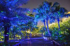 lighting outdoor trees. Outdoor Laser Lights Trees Lighting