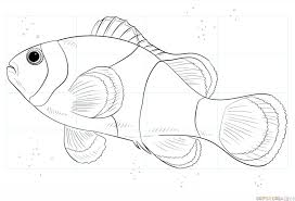 clown fish drawing. Exellent Drawing How To Draw A Clown Fish Throughout Clown Fish Drawing E