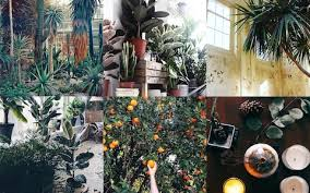 18 must-follow Instagram accounts for urban gardeners | The Telegraph