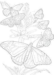 Free Coloring Pages Flowers And Butterflies Free Coloring Pages Of