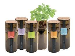 recycled wine bottles have the top section sliced off and inverted and a growing um is set into the upper half the bottle is filled with water