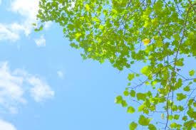 「フリー素材 春」の画像検索結果