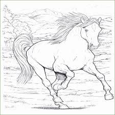 Paarden Kleurplaten Steigeren