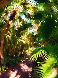 mckee botanical garden v