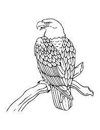 Free Printable Bald Eagle Coloring Pages For Kids Eagles Eagle