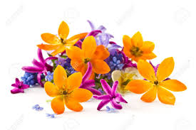 Αποτέλεσμα εικόνας για flower in white background