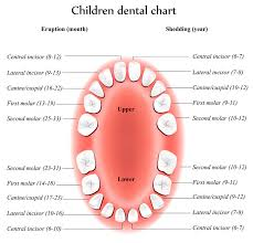 How To Count Teeth Chart Dental Heath Awareness Theme Child Care Training