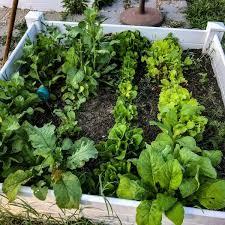 basic vegetable garden layout ideas for