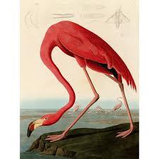 canvas audubon american red flamingo