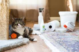 tips for cleaning cat messes and accidents