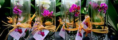 presenting water pearl beads your orchids best friend