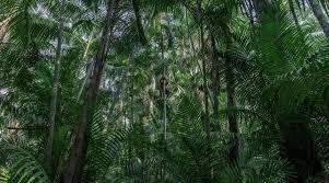 La déforestation de l'Amazonie – Visa pour l'image