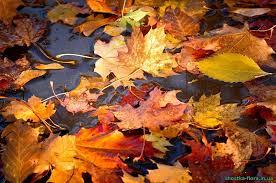 Опале листя користь чи шкода Екологічне просвітництво Реферат на тему опале листя користь чи шкода