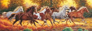 this is a beautiful panoramic puzzle of wild horse running jigsawpuzzlesfors