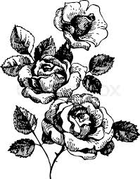 Small Picture Drawn rose plant Pencil and in color drawn rose plant