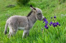 Image result for images donkeys