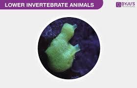 Kingdom Animalia Characteristics Of Lower Invertebrate Animals
