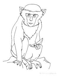 nocturnal animals coloring pages. Perfect Coloring Free Coloring Pages To Print Animals Nocturnal Animal  Colouring Wild Printable For L