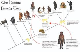 Human Family Tree Chart Episode 10 Field Guide The Hobbit An Unexpected Discovery