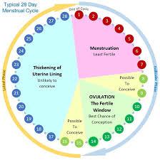 Period Cycle Pregnancy Chart Menstrual Cycle Ovulation Calendar Calculator Fertility