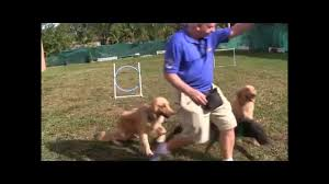 Dog Training Hand Signals In Obedience Training