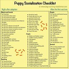 Puppy Clicker Training Socialization Is One Of The Most