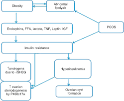 Hyperinsulinemia An Overview Sciencedirect Topics