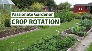 vegetable families crop rotation