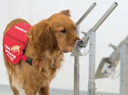 Medical Detection <b>Dogs</b>