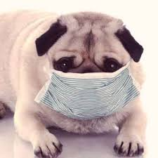 Azithromycin For Dogs Dosage Chart A Guide To Azithromycin Zithromax For Dogs And Cats