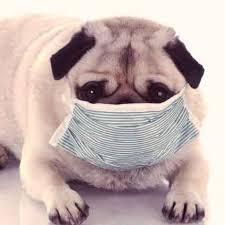 Using Rimadyl Carprofen For Dogs Com