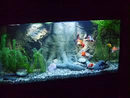 Cool Aquariums 49 Best Aquarium Hobby Images On Pinterest