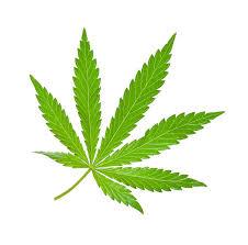 Image result for free pics of marijuana