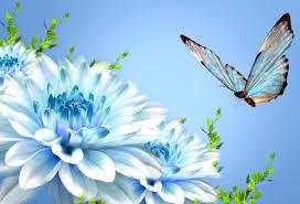 Butterfly Beauty Latest Hd Wallpapers ...