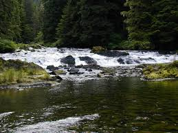essay on water resources mago pilgrimage essay neuk do serpent  blog posts america s salmon forest click here to the essay