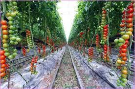 how to grow vegetables in raised garden beds best raised bed gardening tips stacked herb garden