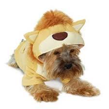 Lion King Sweatshirt   Dog Costume From BowWowsBest.com | Dog Costumes, Dog  Halloween Costumes, Dog Clothes, ...