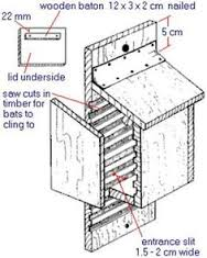 Build homes for birds  bugs and     hogs   Bat Box  Bats and BoxesBat box building details