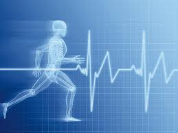 Body Chart Physical Therapy Academic Programs Health And Physical Education Monmouth
