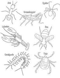 d569ac7f24572986601db91a33c65e1b coloring worksheets science illustration earthworm labeling homeschooling pinterest earthworms on earthworm dissection lab worksheet answers