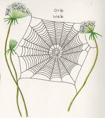 How To Recognize Spiders By Their Webs Bay Nature Magazine