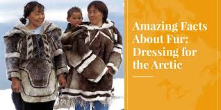 facts about fur caribou parka seal parka sealskin caribou fur
