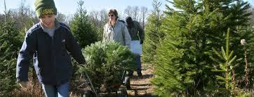 Lincroft Christmas Tree Farm Offers Tips On Cutting Your Own TreeChristmas Tree Cutting Nj