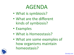 What Is Homeostasis In Biology Symbiosis And Homeostasis Ecology Biology Lecture