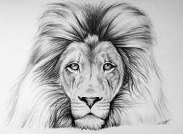 lion drawing. Wonderful Drawing Lion Drawing By LethalChris  Intended
